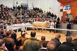 The last Bull Sales